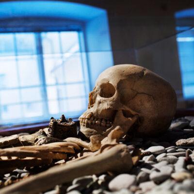 Skelettgrav i utställningen Gotland - 10 000 år . Foto: Karl Melander